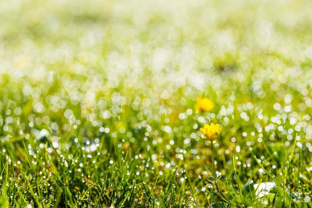 Bokeh-Effekt Blumenwiese im Gegenlicht