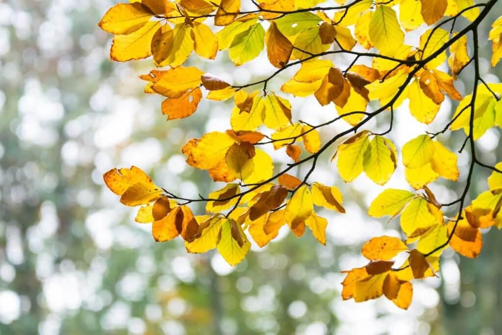 Bokeh-Effekt Herbstblätter im Wald