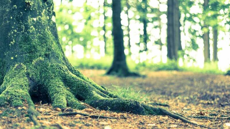 Bokeh-Effekt bei Gegenlicht im Wald