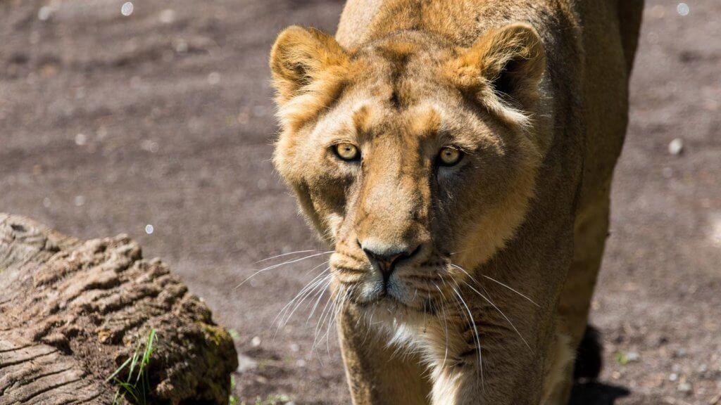 Fotografieren im Tiergarten - Auge in Auge