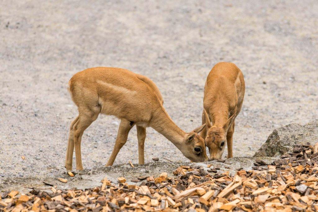Fotografieren im Tierpark
