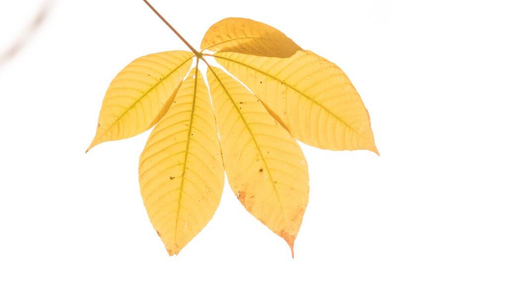 Herbstblätter fotografieren