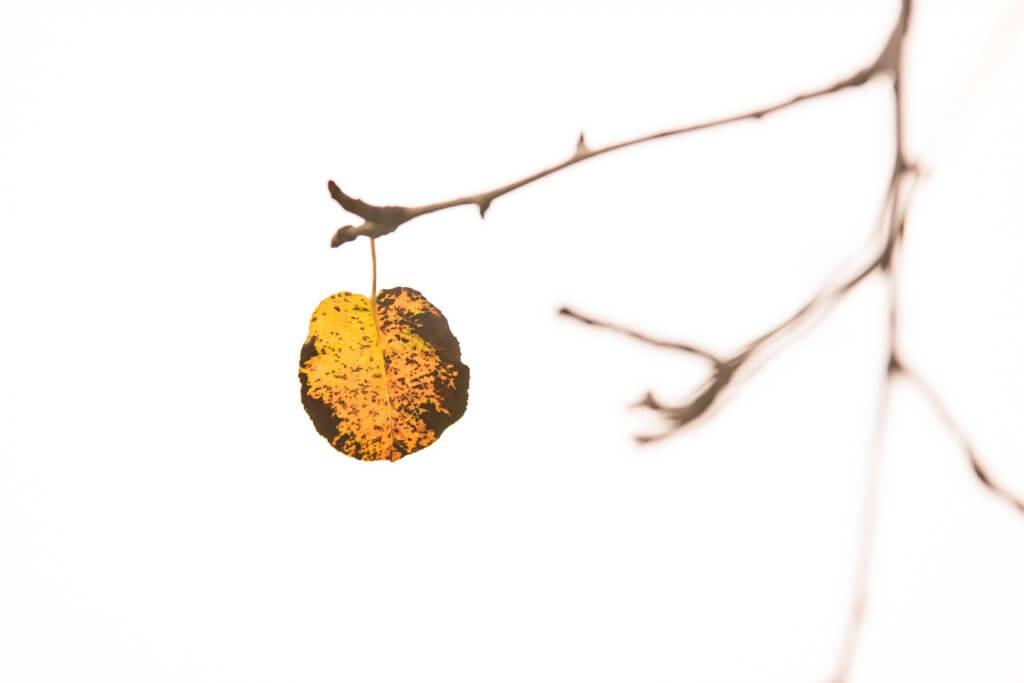 Herbstblätter fotografieren Blende 4