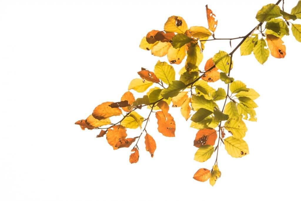 Herbstblätter im speziellen Licht