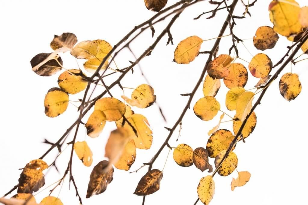 Herbstblätter Spotmessung