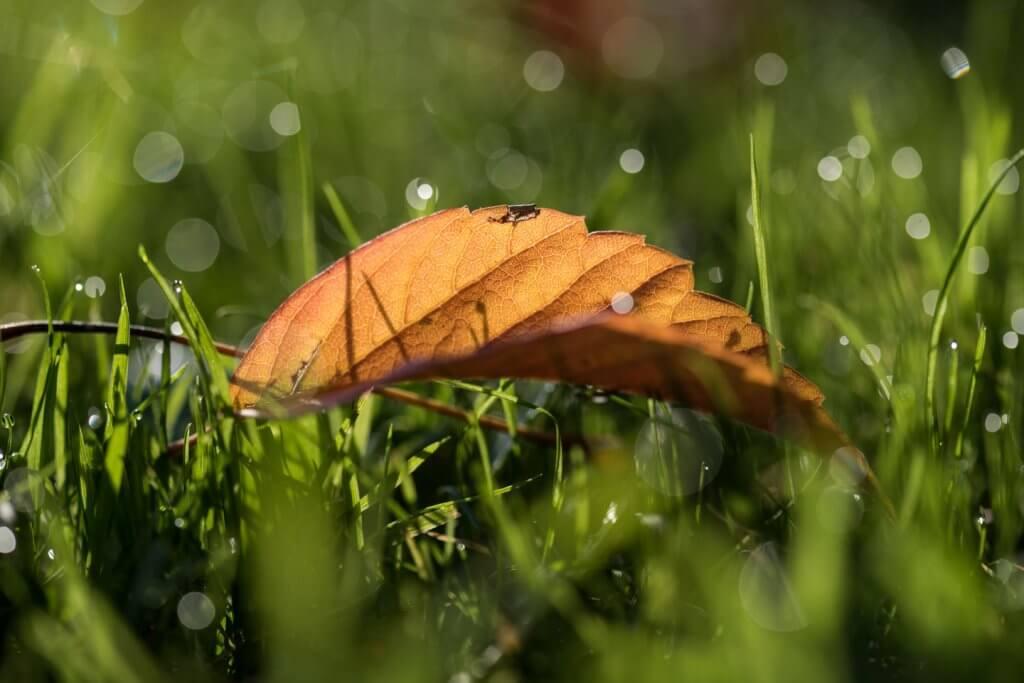 Herbstblatt im taunassen Gras - Spotmessung