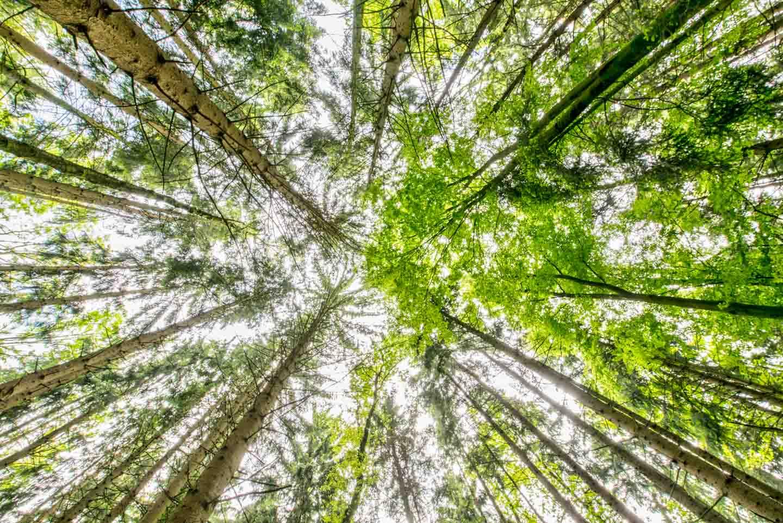 Bildsensor - Bäume aus der Froschperspektive