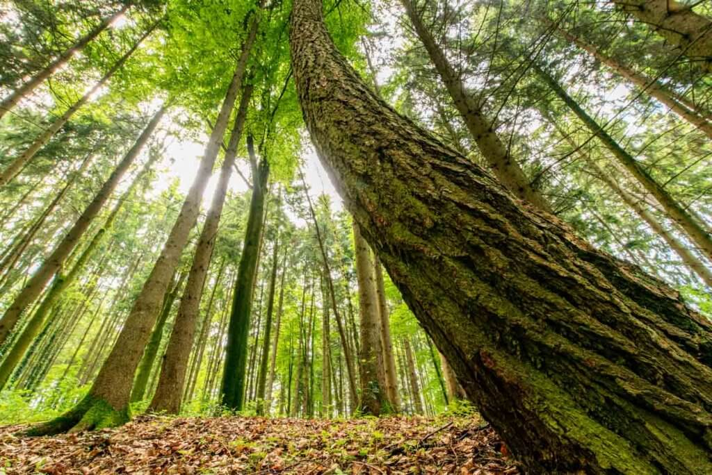 Ultra Weitwinkel Aufnahme im Wald