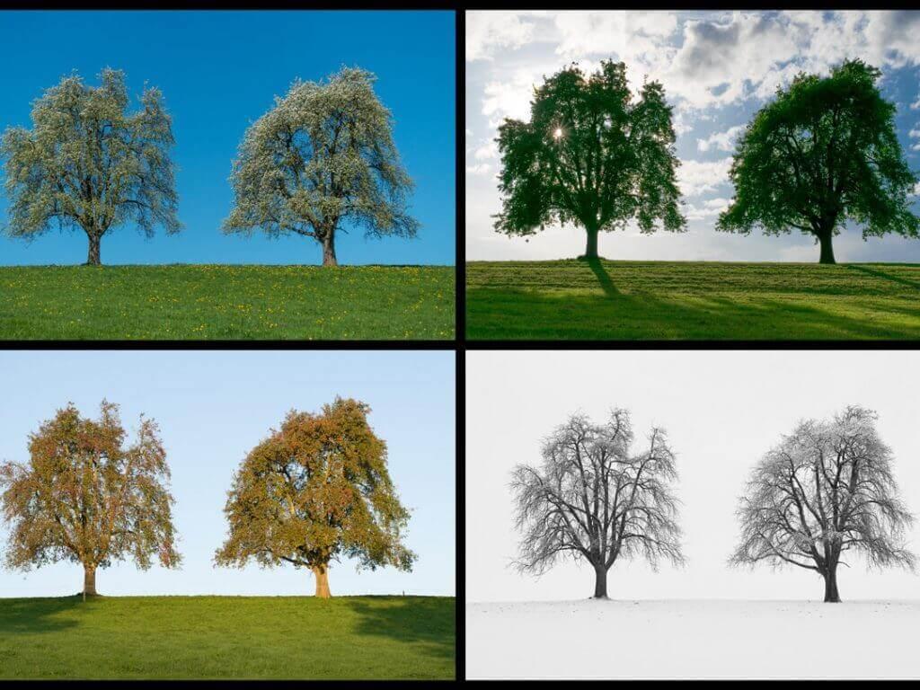 Bildcollage mit GIMP erstellen