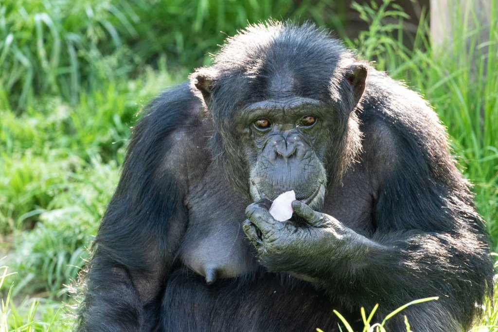 Farbbild zum Vergleich Schwwarzweissbilder im Zoo