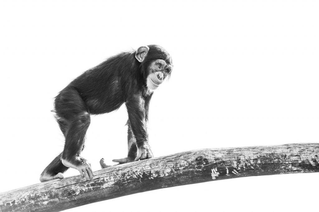 Gegenlicht - Schwarzweissbilder im Zoo