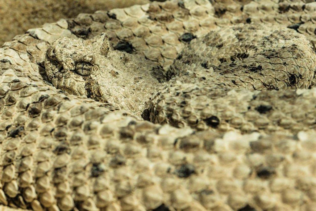 Klapperschlange - Fotografieren im Zoo