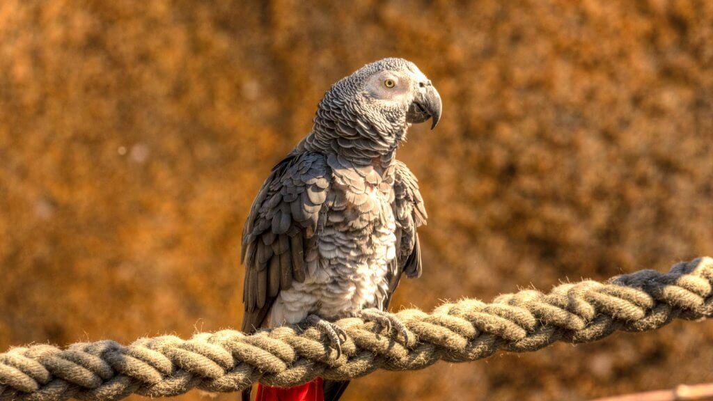 Papagei im Tiergarten 2