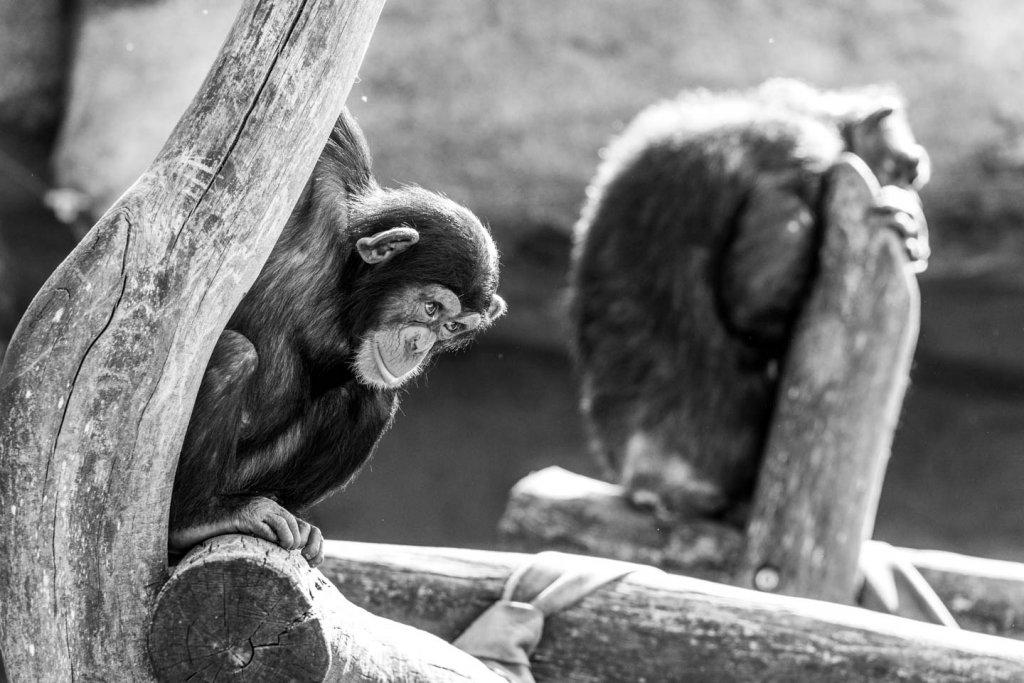 Schwarzweissfotos im Zoo
