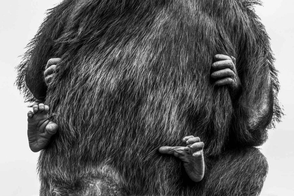 Schwarzweissfotos im Zoo - Perspektivenwechsel