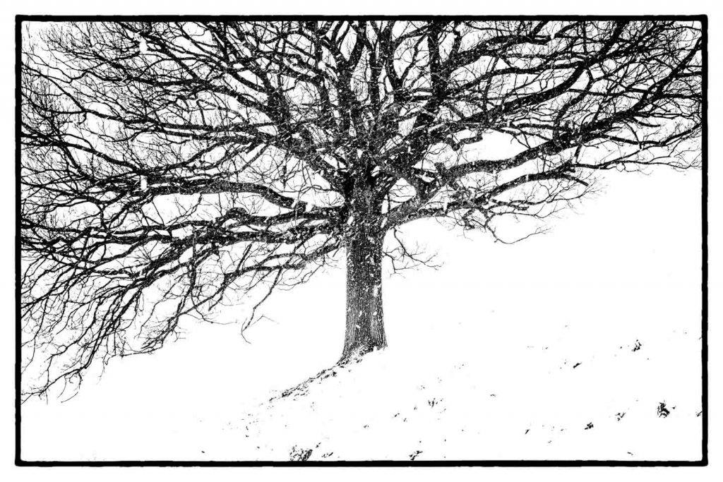 Bäume fotografieren im Winter