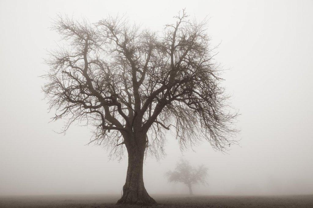 grosser und kleiner Baum im Winter bei Nebel